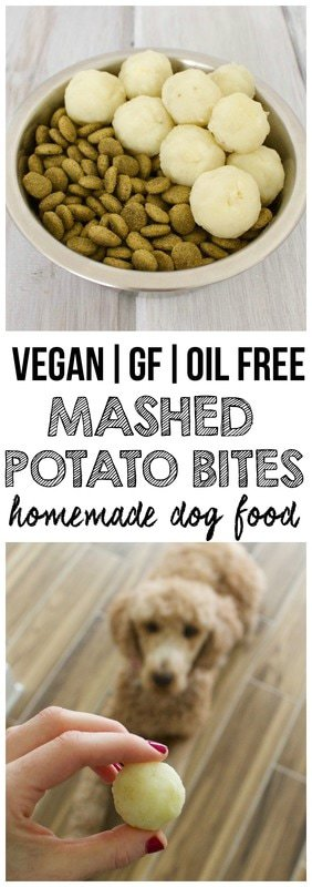Healthy Homemade Dog Food: Mashed Potato Bites! (Vegan, Gluten-Free, Oil-Free)